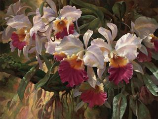 Picture of Cattleya Magnificent
