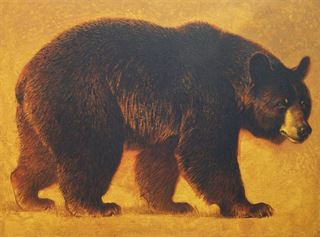 Picture of Pepper, Male Black Bear