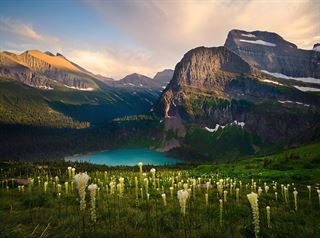 Picture of Bear Grass Heaven