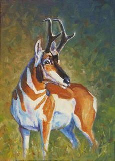 Picture of Pronghorn