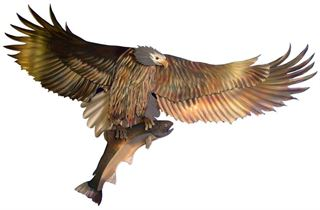 Picture of Eagle - Catch of the Day