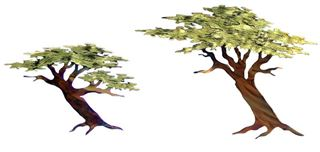 Picture of Single Cypress (Large)