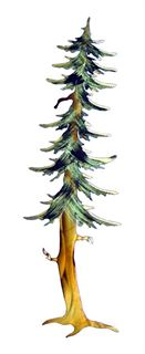 Picture of Single Fir