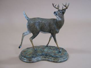 Picture of Whitetail