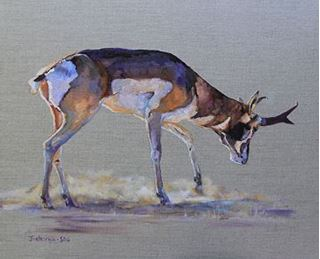 Picture of Pronghorn and Dust